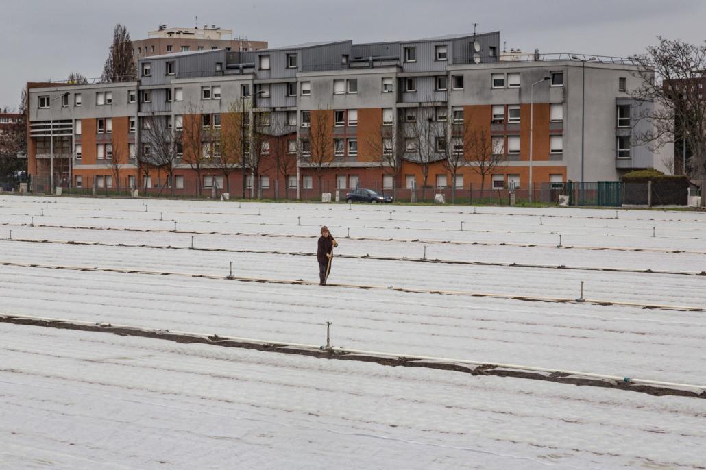 champs_agriculture_manolo_mylonas_photographie_banlieue_paris_paysage_urbain_humain_seine_saint_denis200