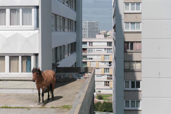 cheval_toit_hlm_manolo_mylonas_photographie_banlieue_paris_paysage_urbain_humain_seine_saint_denis