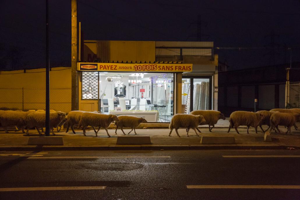 mouton_nuit_manolo_mylonas_photographie_banlieue_paris_paysage_urbain_humain_seine_saint_denis192
