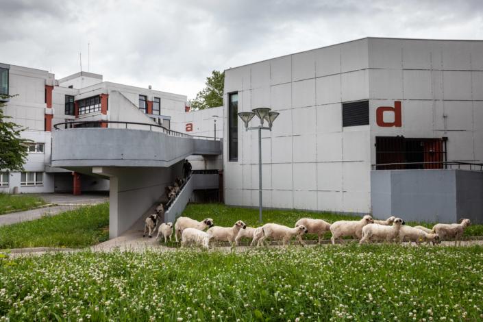 moutons_manolo_mylonas_photographie_banlieue_paris_paysage_urbain_humain_seine_saint_denis156